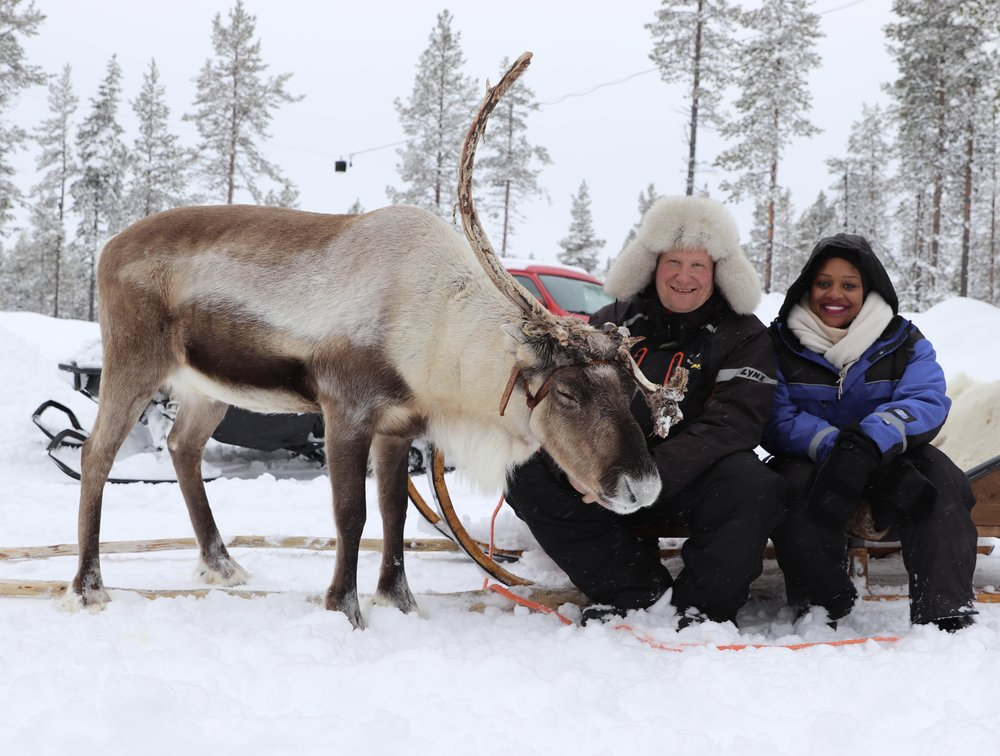 Reindeer - What to Do In Finland Laplands arctic circle- RachelTravels.com