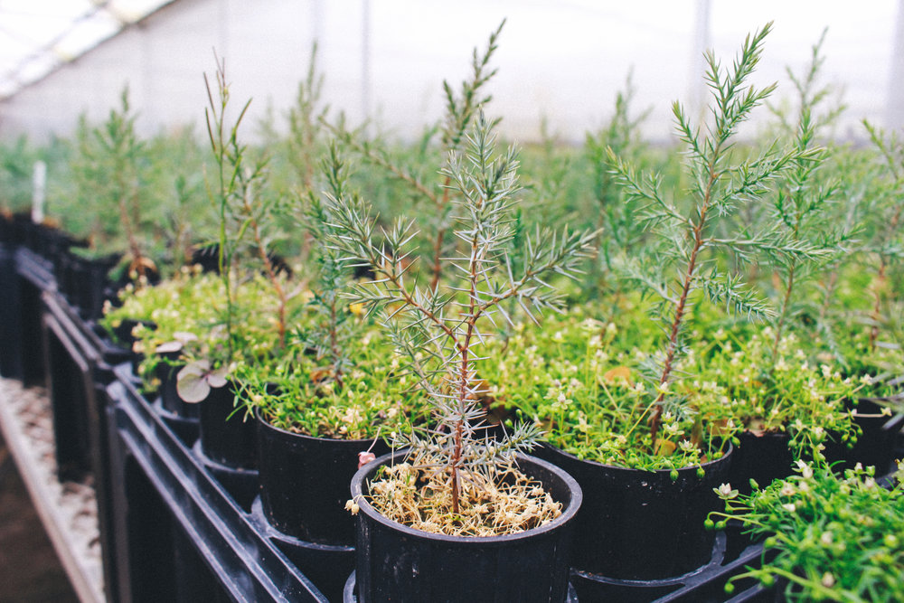 One Tree Planted053.jpg