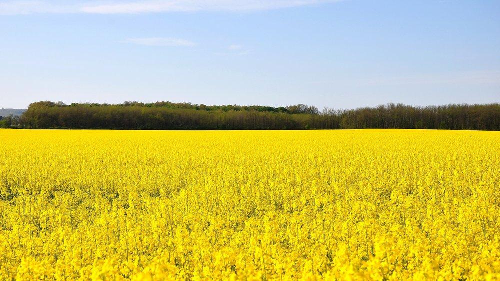 spring-1344437_1920.jpg