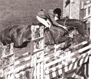 horse jump2.png