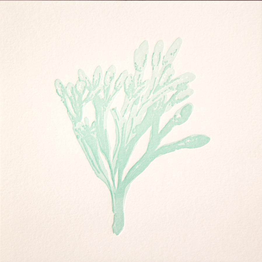 harada seaweed 1.png