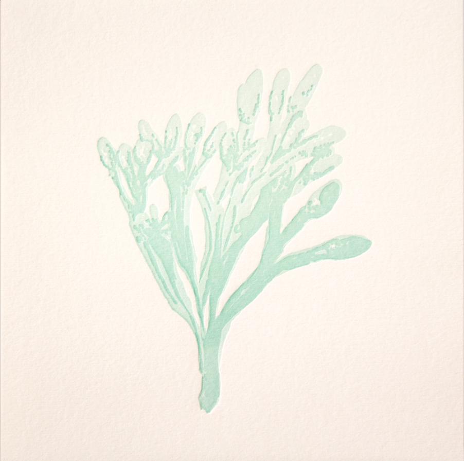 harada seaweed 3.png