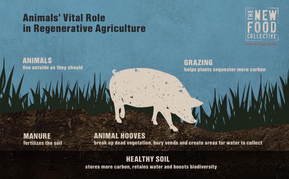 Animal's Vital Role in Regenerative Agrigulture