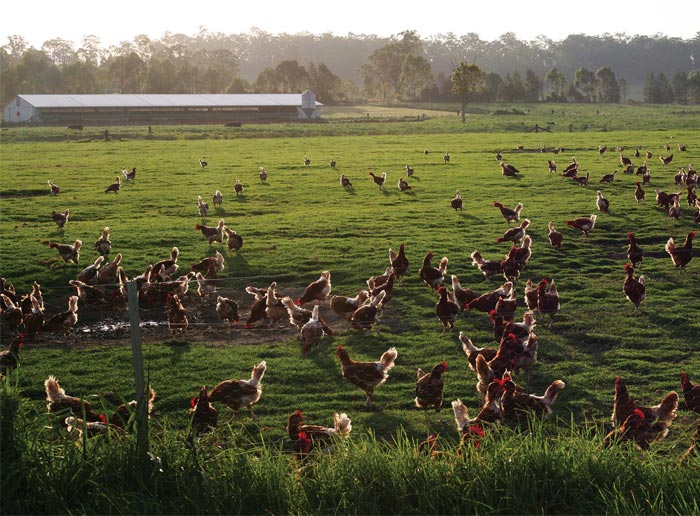 Farming in Manning Valley