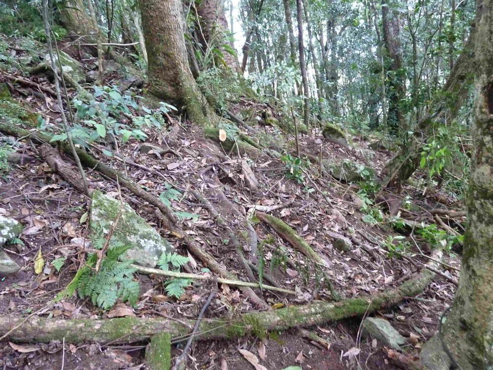 P1020828 switch back  staircase, land slip bypass, Mt Cordeaux, 2014, before 3.JPG