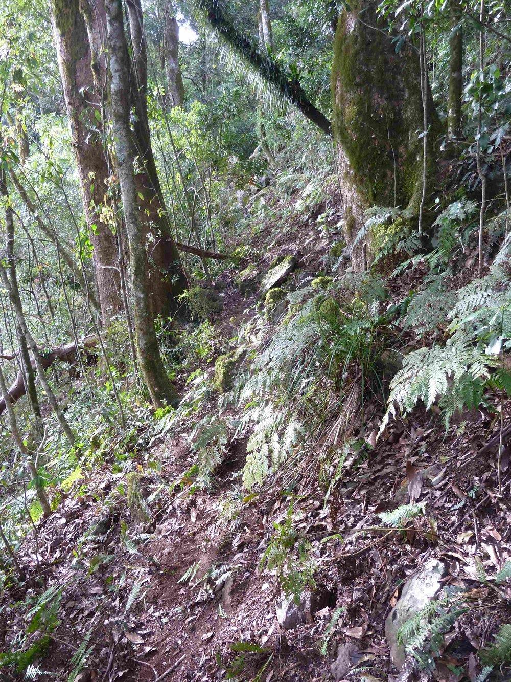 P1020837 landslip bypass, Mt Cordeaux, 2014, before 5 .JPG