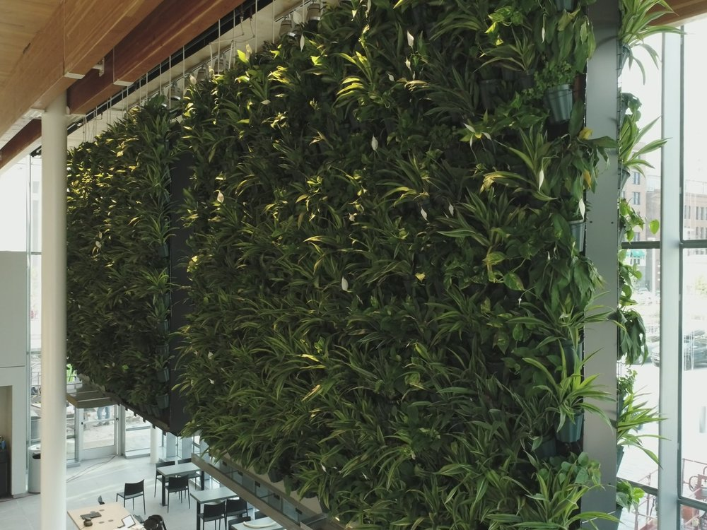 792 square-foot living wall