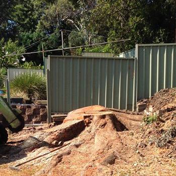 King Stump Removal Mammoth Stump
