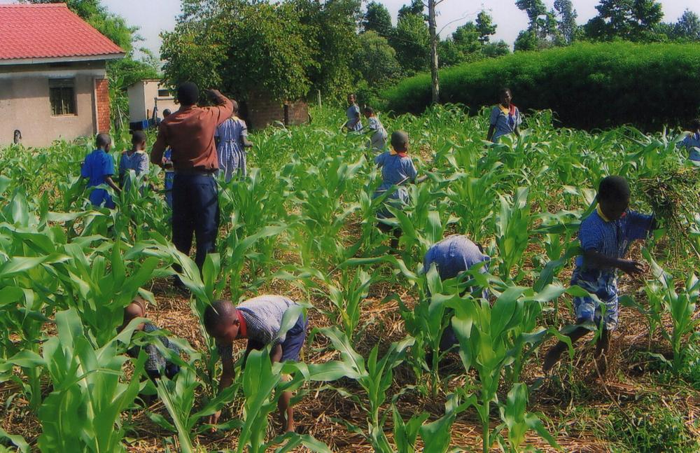 farming-1024x663.png