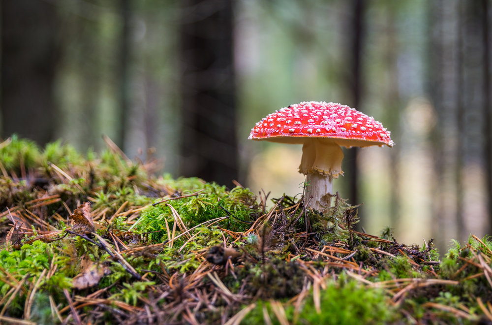 whacky idea of producing electricity from a mushroom covered in bacteria -