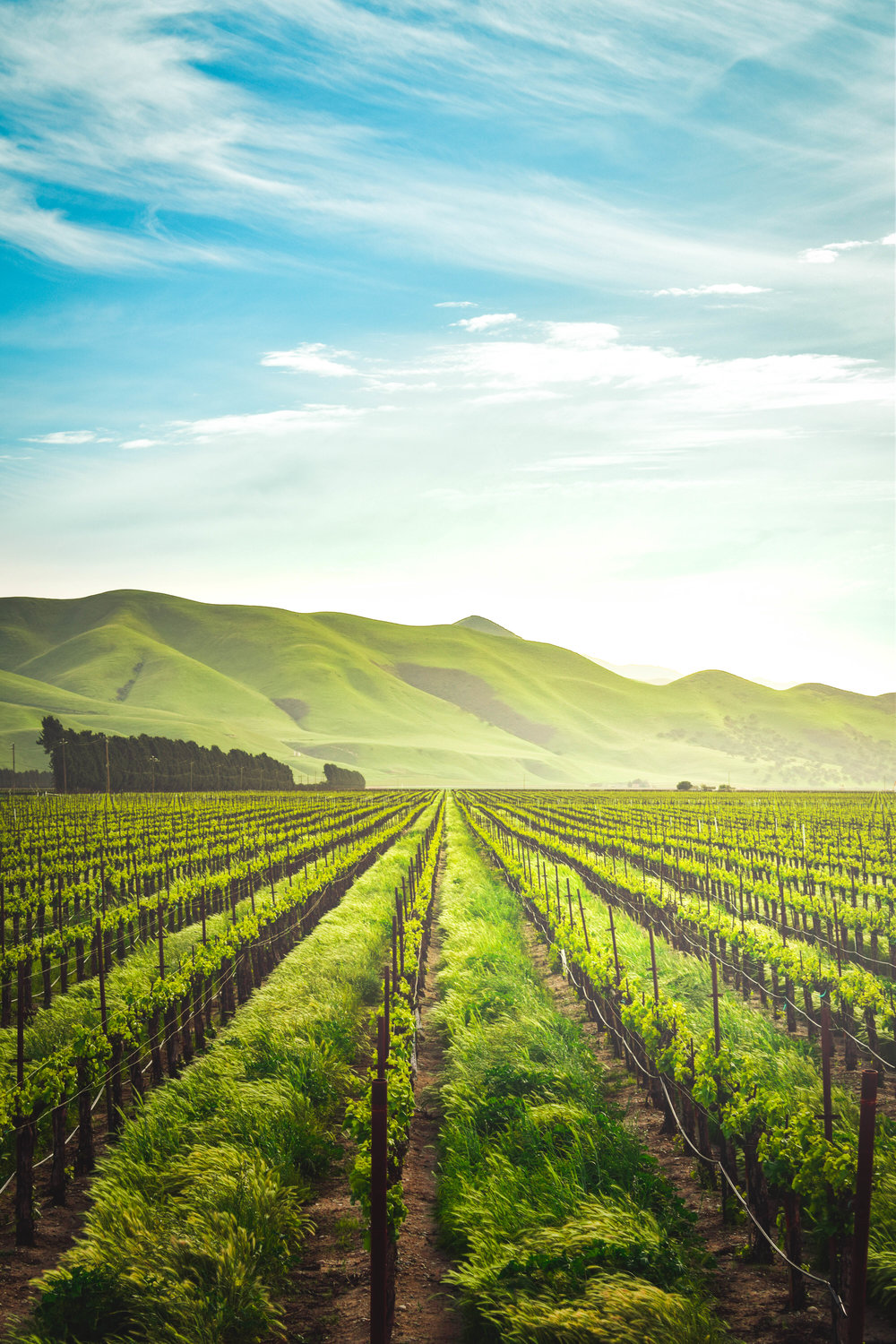Why organic farming can help feed the world sustainably -