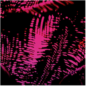 PINK NOISE (Neon Nature)