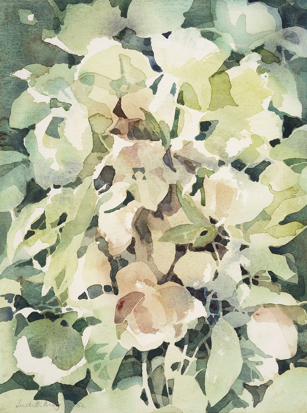 Judith Moy (b. 1927)    Flowers (Helleborus Orientalis),  1982, Watercolour on paper, 14 ½ x 11 in, Signed and dated  [CAS 41] Acquired in 1982
