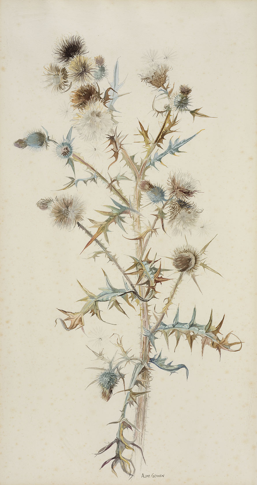 Aline Gowen (1907-1999)    Spear Thistle,  c.1968, Watercolour on paper, 28 ¾ x 15 ¼ in, Signed  [CAS 12]