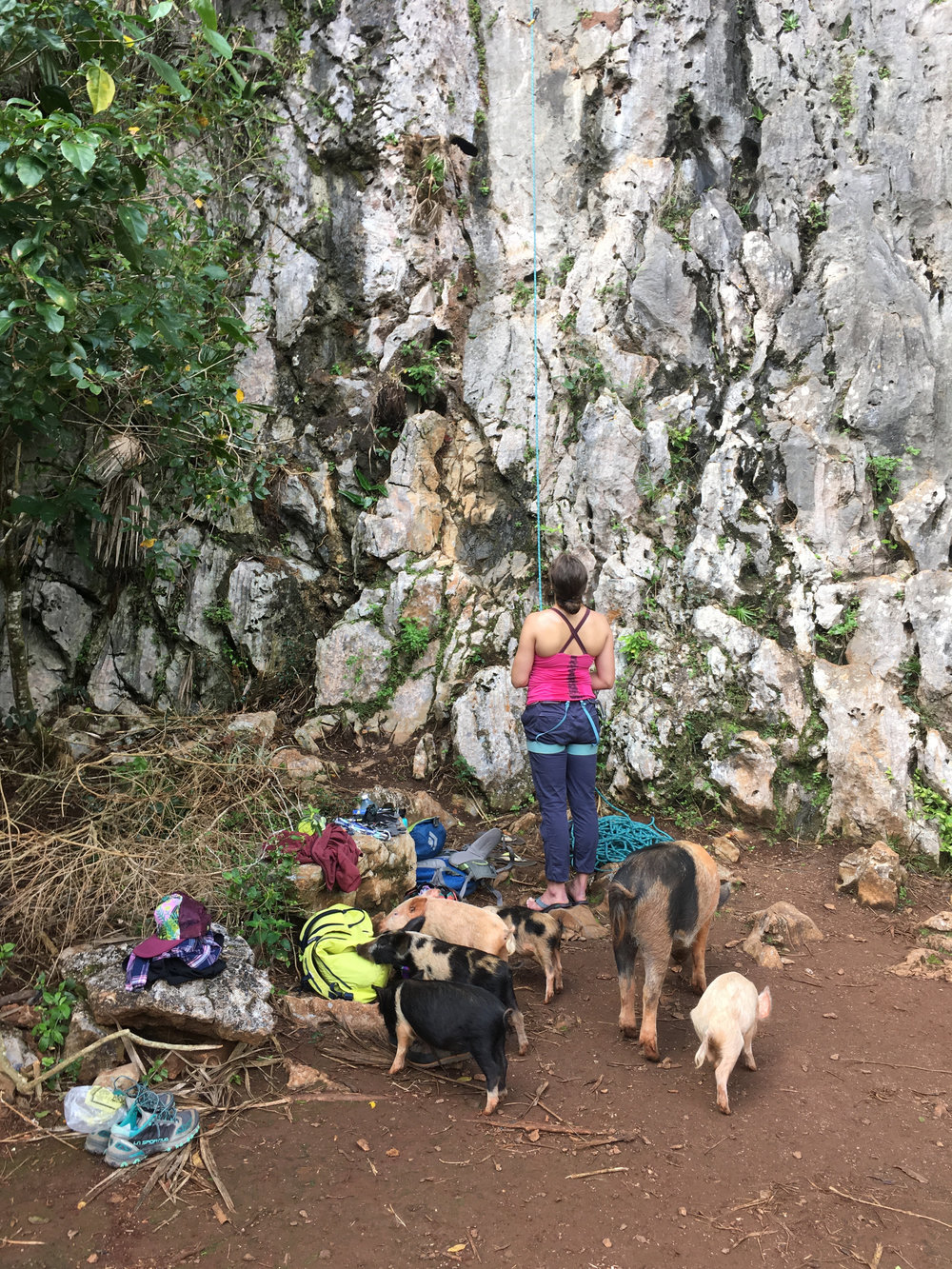 Belaying with pigs in Cuba!