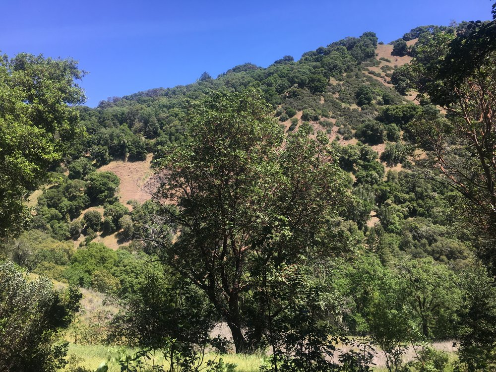 Mixed terrain on 40 acres near Yorkville and Hopland for sale.