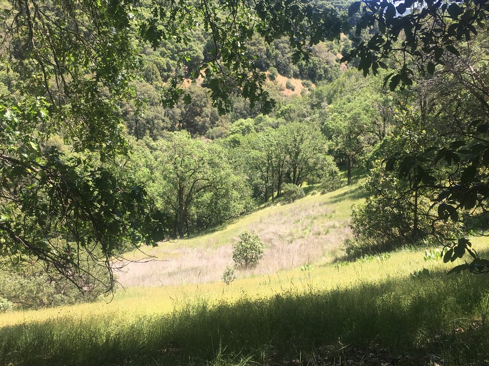 Bright sunny meadow on land for sale in Mendocino county.