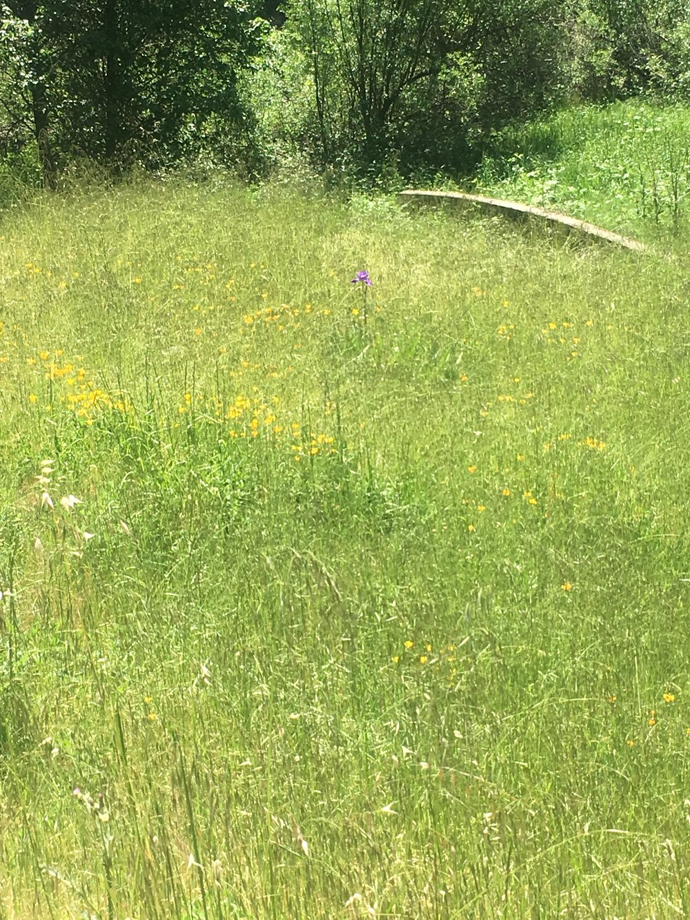 Verdent meadow on 40 acre parcel, Yorkville, Mendocino County.