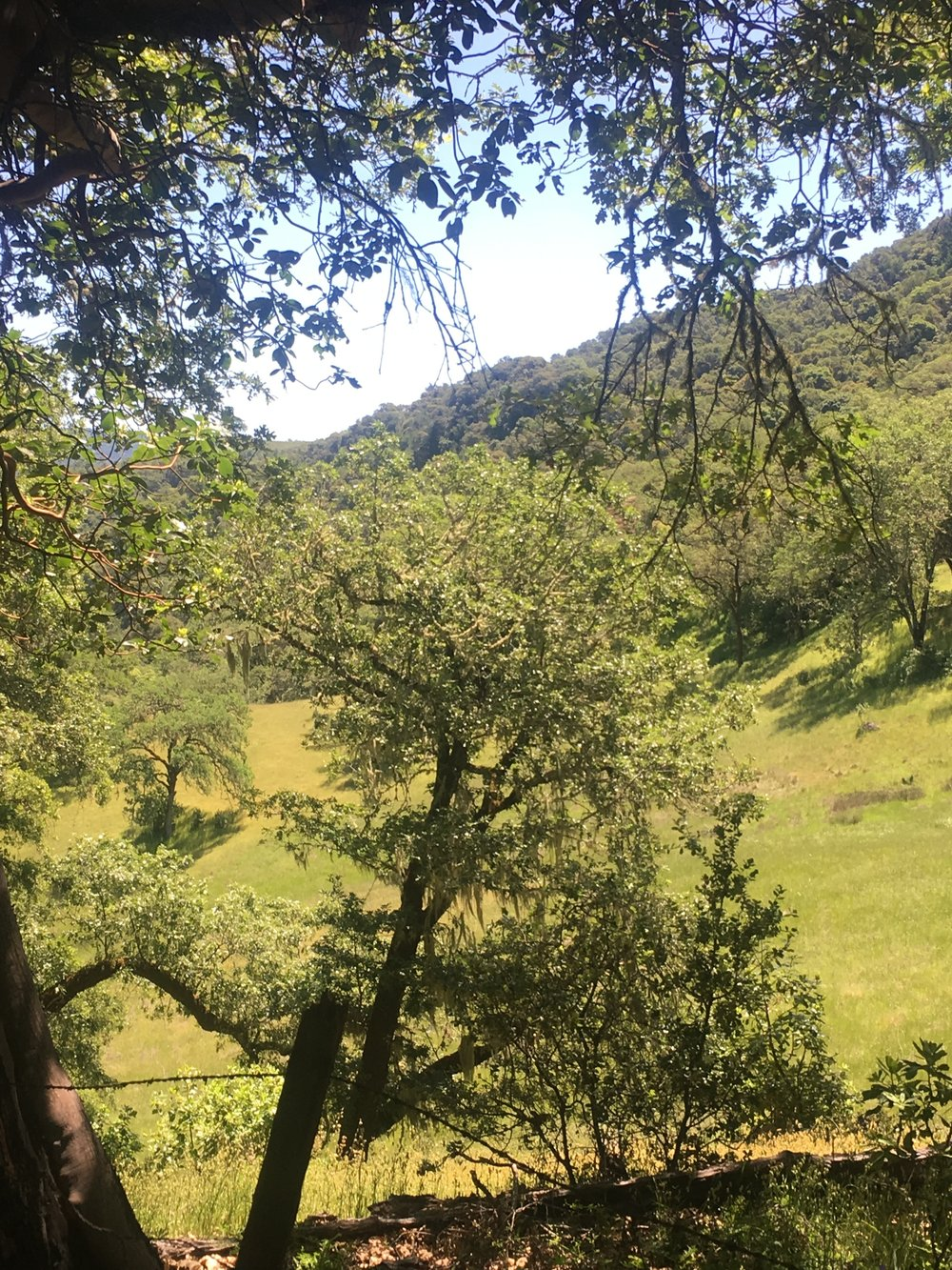 Beautiful scenes of wilderness on 40ac ranch in Mendocino County.