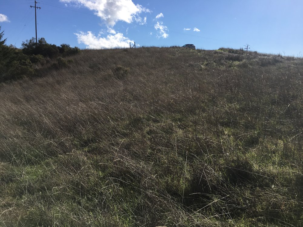 Meadow on a property for sale on Clow Ridge in Philo, CA.
