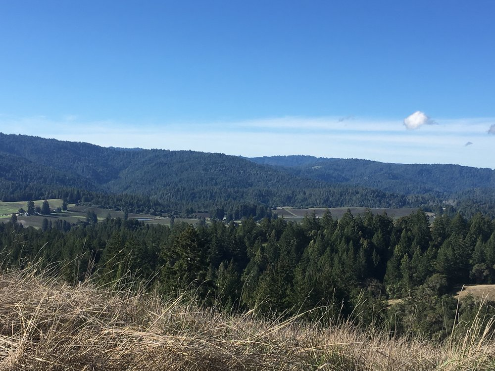 Views towards the ocean on a property for sale on Clow Ridge in Philo, CA.