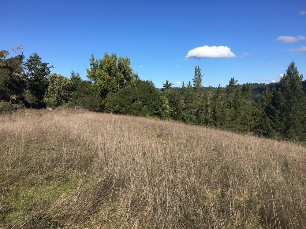 A meadow on a property for sale on Clow Ridge in Philo, CA.