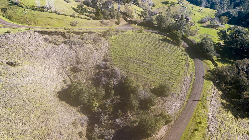 Vineyard in the sun, Philo, CA 95466