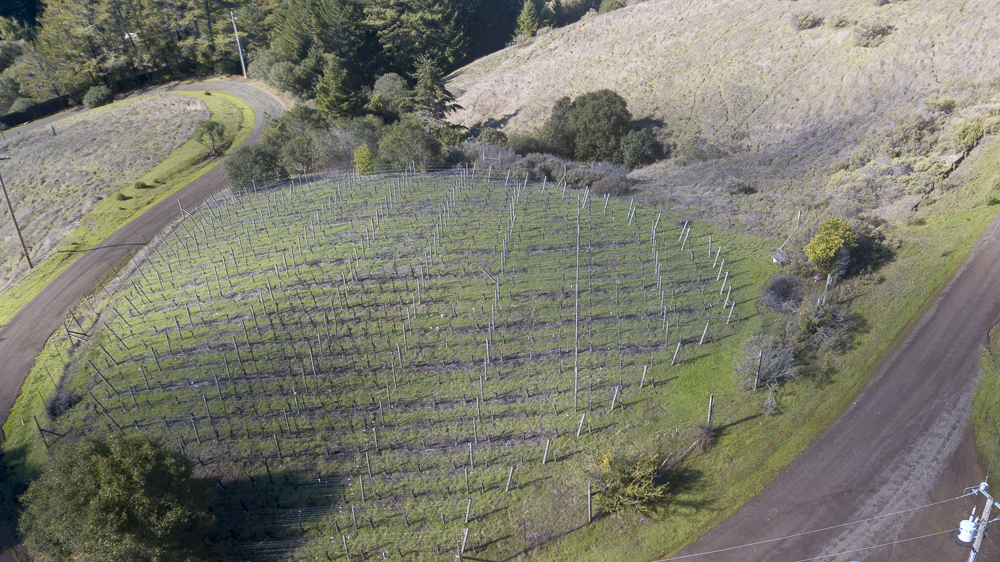 Close-up of the one acre vineyard. bio-dynamically grown.