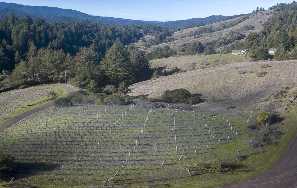 Pinot Noir, bio-dynamic, one acre, award winning fruit.
