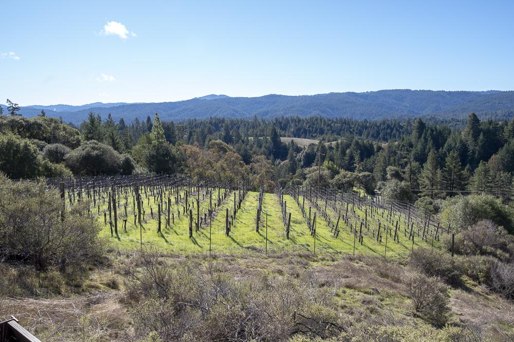 One acre award winning vineyard.