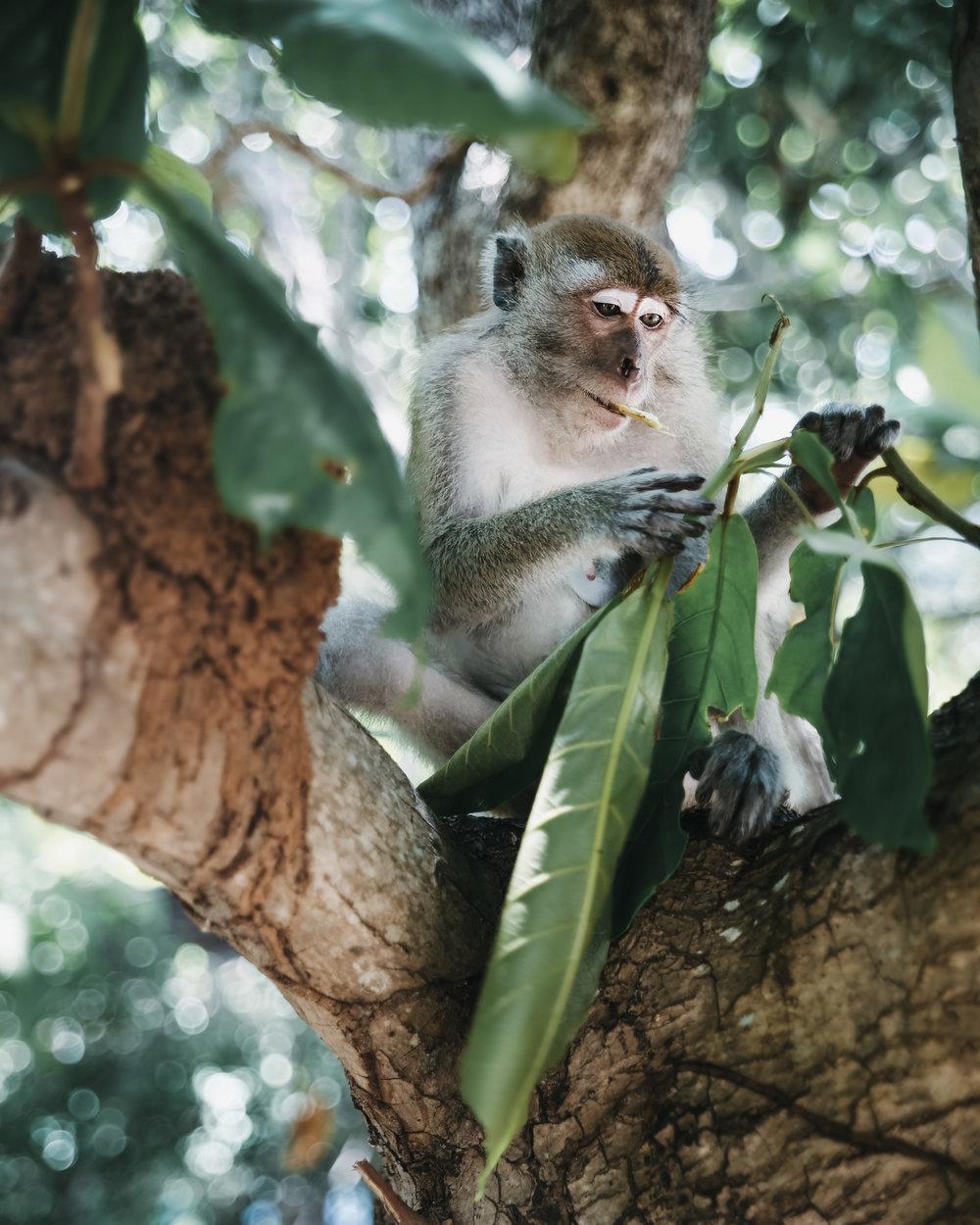 Wildlife monkey bali BY MADS NORDSVEEN