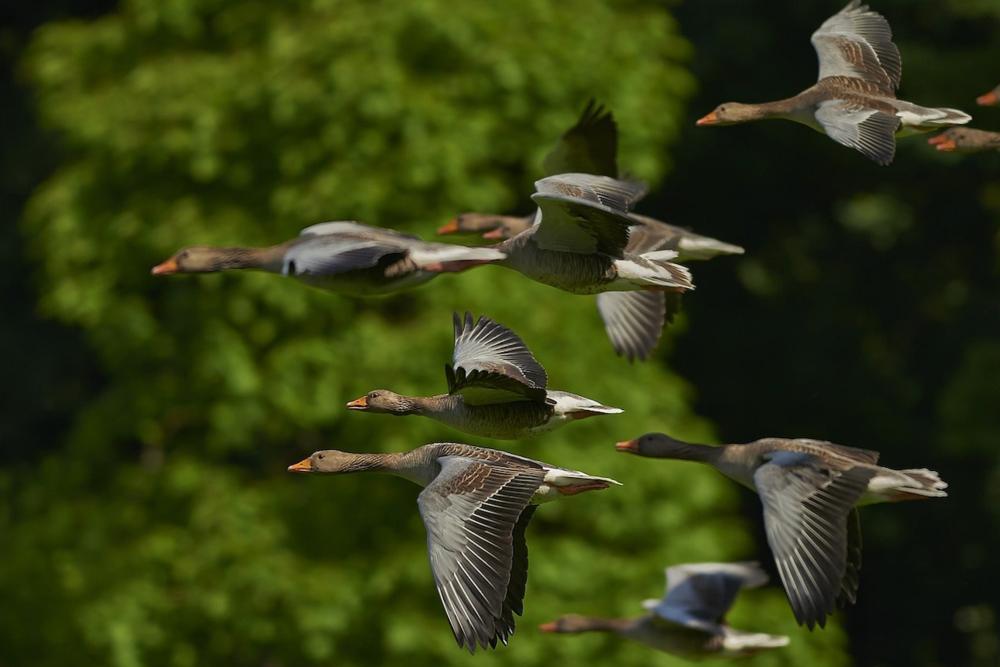 flockofbirds.png