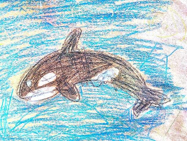 kids weigh in - We're also gathering (adorable) drawings of orcas to submit to the NEB. Submit an orca drawing by email here.