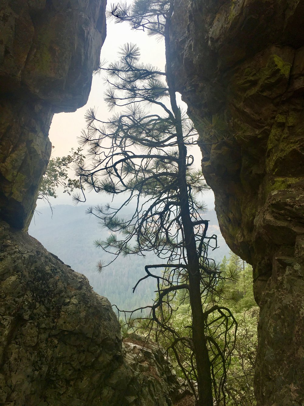 Looking through Cougar Rock.    See video of the top of Cougar Rock