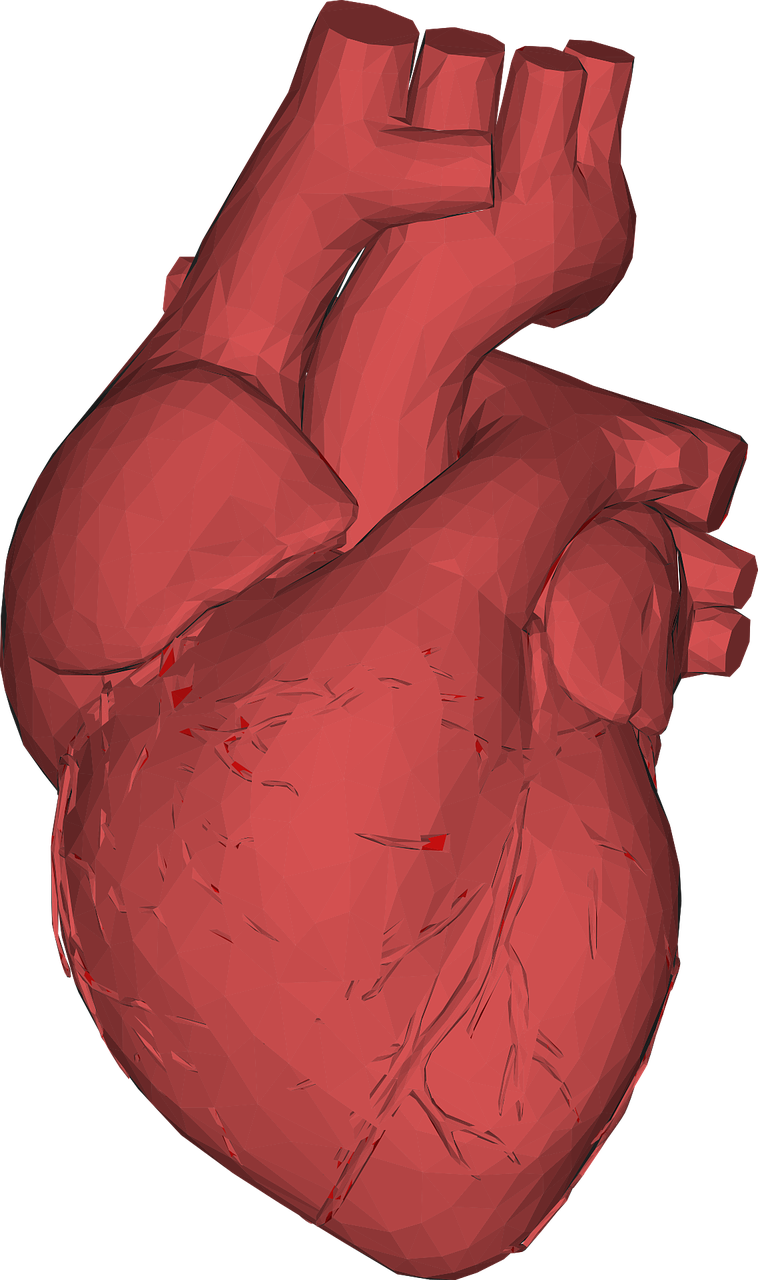 heart-3176781_1280.png