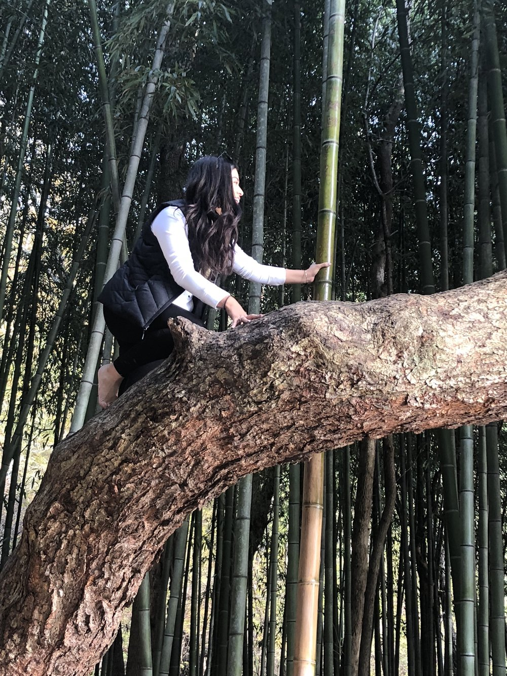 Climbing a tree….for a good picture in the bamboo forrest