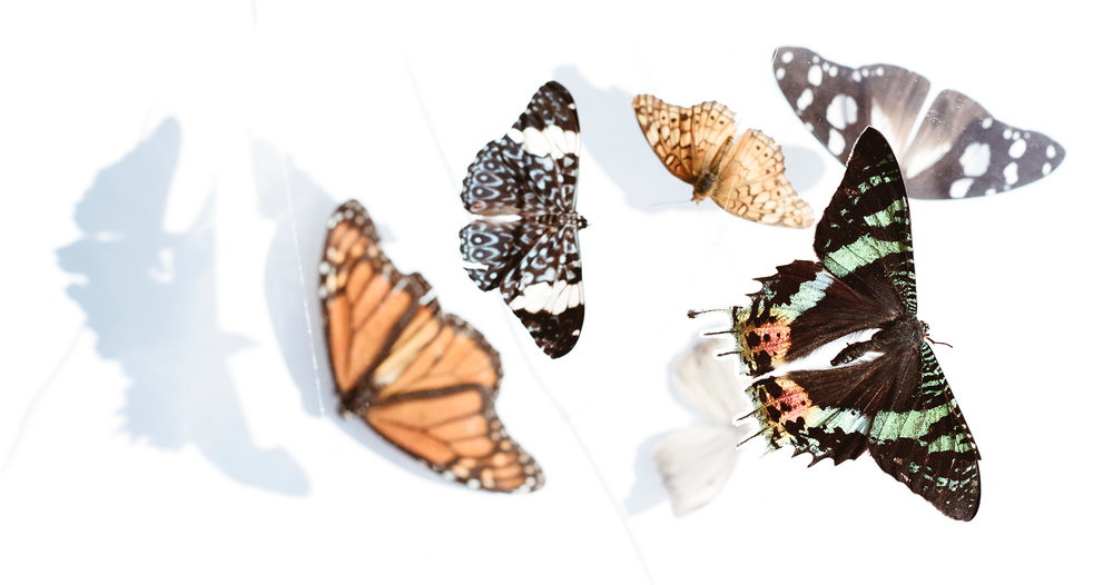 butterflies-cropped.jpg