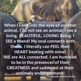 Initial Experience between Nanette Wheeler and a herd of elephants in South Africa 2014