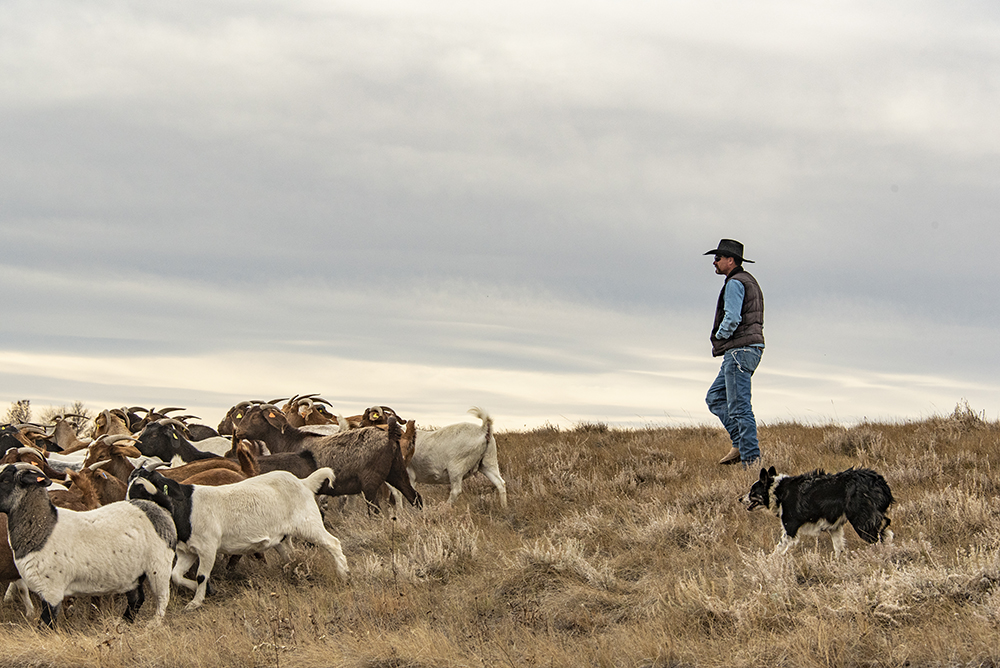 About - Find out about our organization,mission, our methods, and how grazing strategies can support the health and survival of native plant species.