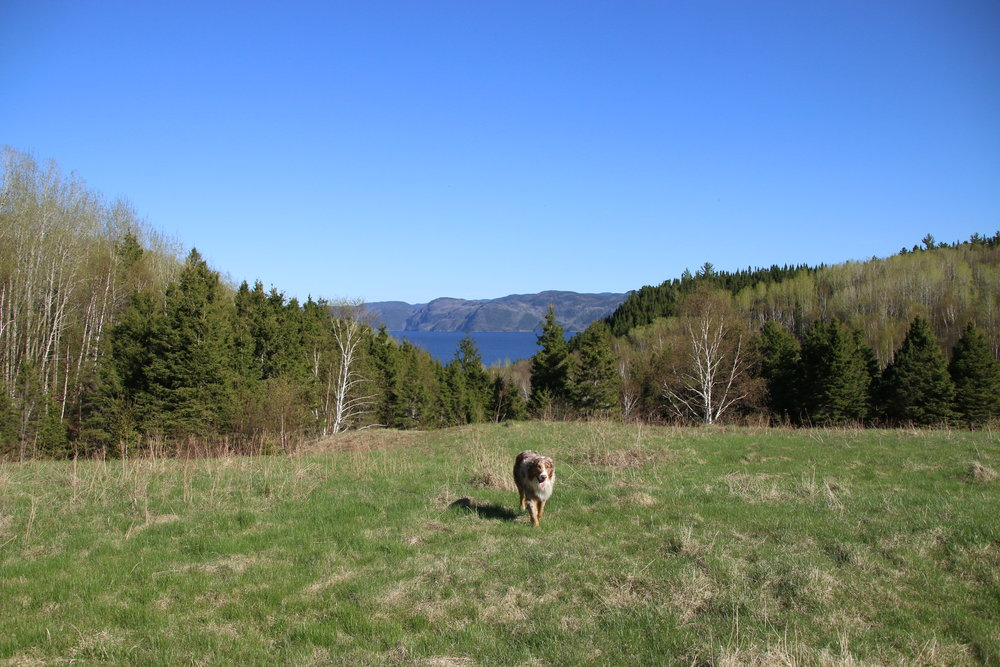 A lone dog trots along the intended site for Vikingård, overlooking the fjord to the southeast