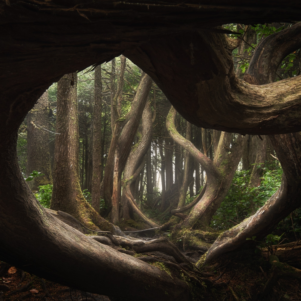 Twisted Forest, Botany Bay