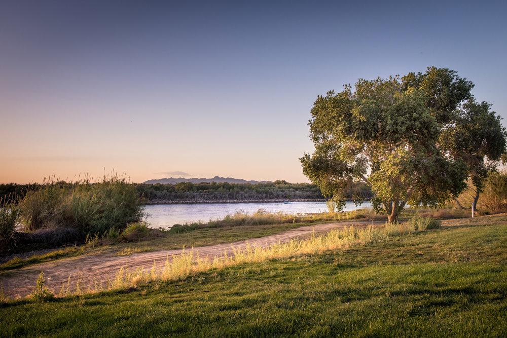 colorado-river-grass-near-blythe.jpg