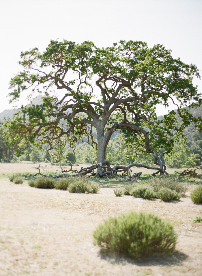 Rad-lab-tree_o.jpg