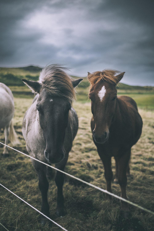 Looking At Horses_2.jpg
