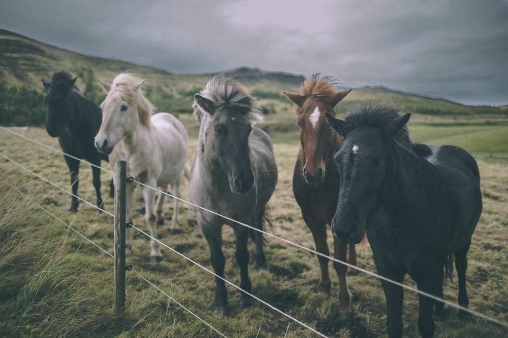 More Beaut Horses_1.jpg