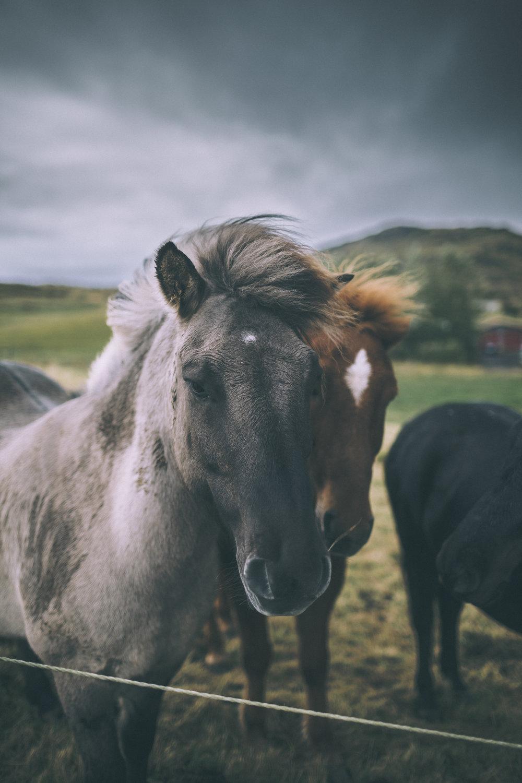 More Beaut Horses_2.jpg
