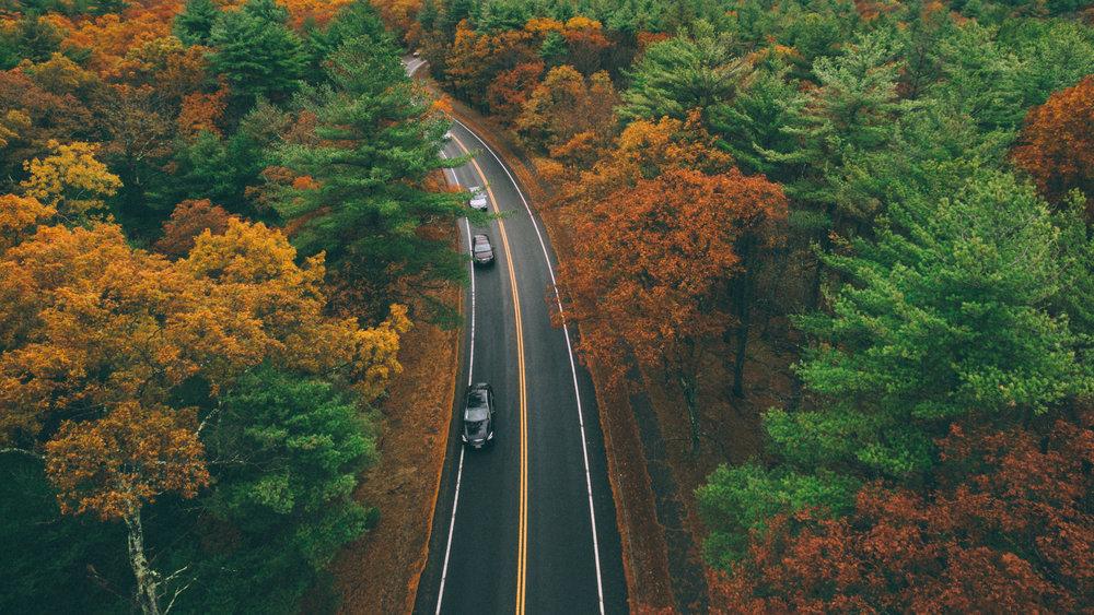 November's Foliage_1.jpg