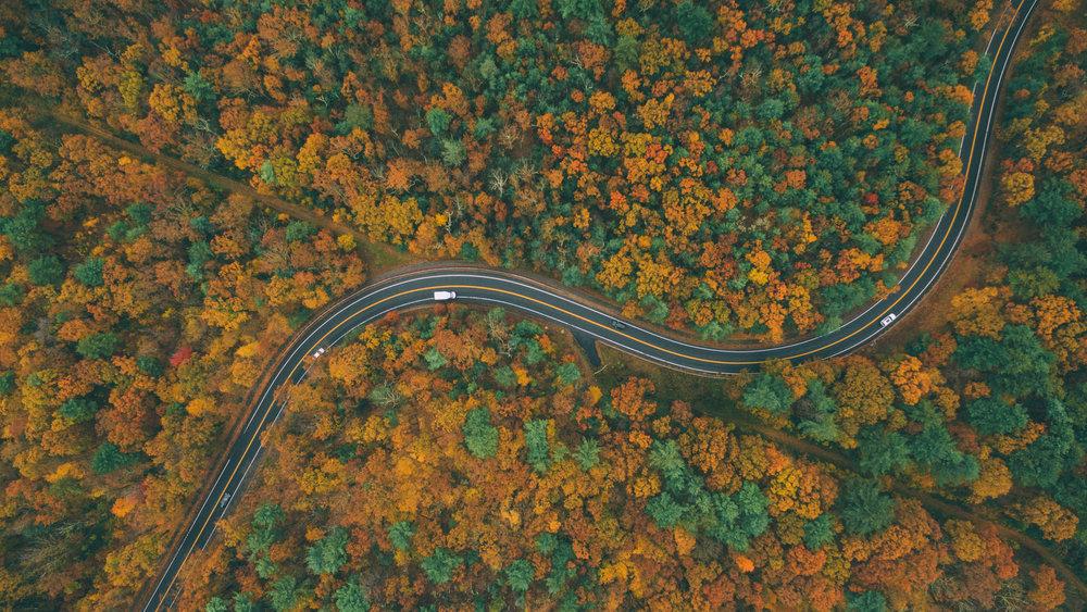 November's Foliage_4.jpg