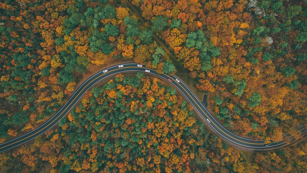 November's Foliage_6.jpg