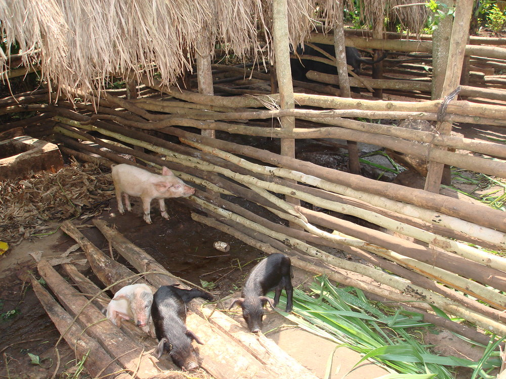 New Standing with Boys piggery in Uganda